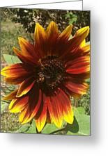 Warm Sun Flower Greeting Card