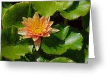 Warm Yellows Oranges And Corals - A Waterlily Impression Greeting Card