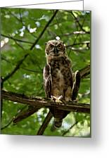 Warm Young Great Horned Owl Greeting Card