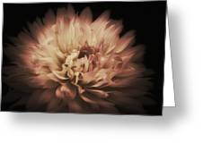 Warmth Of A Dahlia Greeting Card