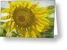Warmth Upon My Back - Sunflower Greeting Card