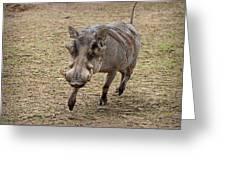 Warthog Approach Greeting Card