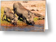 Warthog Family Greeting Card