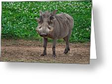Warthog Stance Greeting Card