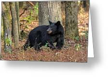 Wary Black Bear Greeting Card