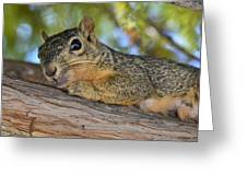 Wary Squirrel Greeting Card