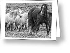 Wary Stallion Greeting Card