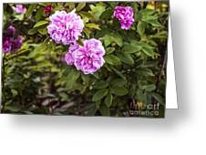 Wascana-9 Greeting Card