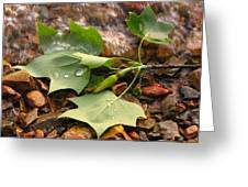 Washed Up Leaves Greeting Card