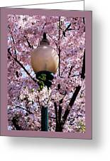 Washington Cherry Blossoms And A Lantern Greeting Card