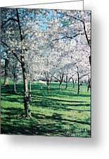 Washington Dc Cherry Blossoms Greeting Card