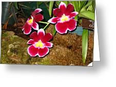 Washington Dc - Us Botanic Garden. - 121215 Greeting Card