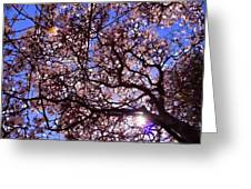 Washington Park Iv Greeting Card
