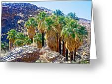 Washingtonian Fan Palm Grove Along Lower Palm Canyon Trail Near Palm Springs-california  Greeting Card