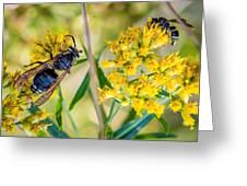 Wasp 2 Greeting Card