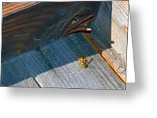 Wasp 4 Greeting Card