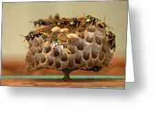 Wasp Hotel Greeting Card