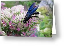 Wasp On Sedum Greeting Card