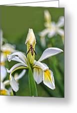 Wasp On White Iris Greeting Card