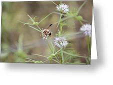 Wasp Variety Greeting Card