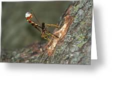 Wasphornet Greeting Card