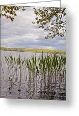 Watchaug Pond Greeting Card
