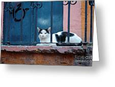 Watchful Cat, Mexico Greeting Card