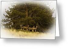 Watchful Eyes 2 Greeting Card