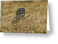 Watchful Eyes Of The Great Gray Owl Greeting Card