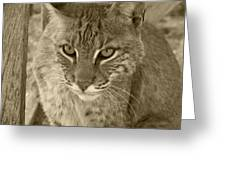 Watchful Eyes-sepia Greeting Card