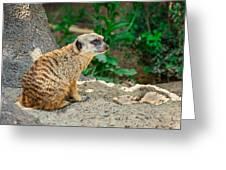 Watchful Meerkat Greeting Card