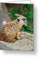 Watchful Meerkat Vertical Greeting Card