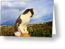 Watching The Rainbow Greeting Card