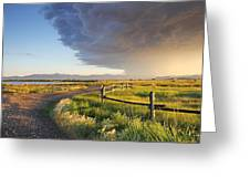 Watching The Storm Greeting Card by Dana Moyer