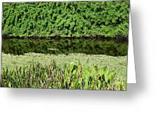 Water And Green Greeting Card