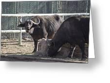 Water Buffalo Greeting Card