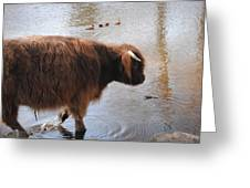 Water Buffalo Greeting Card