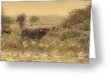 Water Buffaloes At Corroboree Billabong V2 Greeting Card