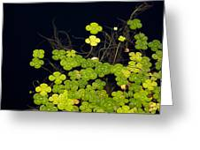 Water Clover Greeting Card