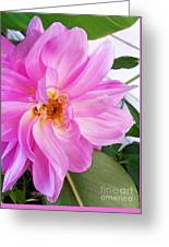 Water Color Dahlia Greeting Card