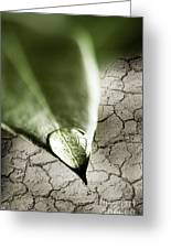 Water Drop On Green Leaf Greeting Card