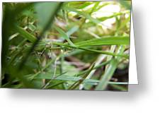 Water Droplet On Grass Blade Greeting Card