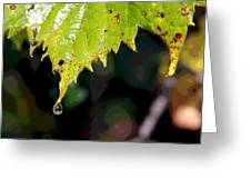 Water Droplet On Leaf Greeting Card by Greg Thiemeyer