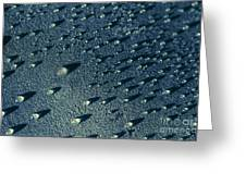 Water Droplets Close-up View  Greeting Card