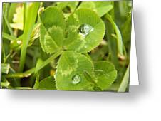 Water Droplets On Clover Greeting Card