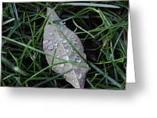 Water Droplets On Leaf Greeting Card