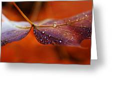 Water Droplets On Red Autumn Leaf Greeting Card