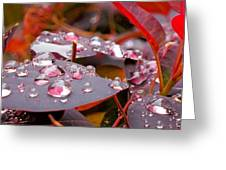 Water Drops After The Rain Greeting Card