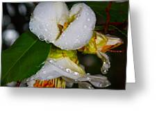 Water Drops Galore  Greeting Card