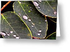 Water Drops Leaves Greeting Card